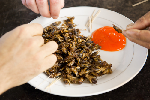 Fried Crickets Meal with sauce — © Photo by HASLOO/Depositphotos
